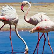 Sea and flamingos